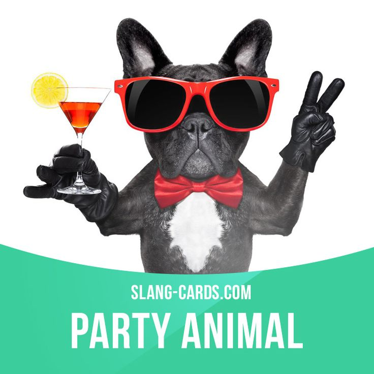 """""""Party animal"""" means a person who loves to go to parties. Example: Emma went to three parties tonight. She's such a party animal! Get our apps for learning English: learzing.com"""