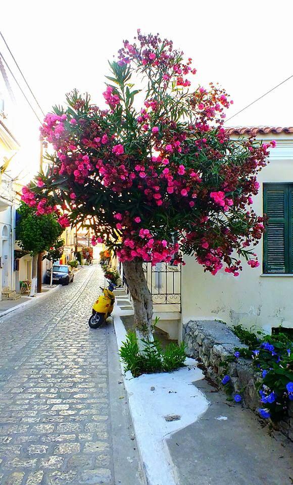 SAmos Pitagore  sokak 2016