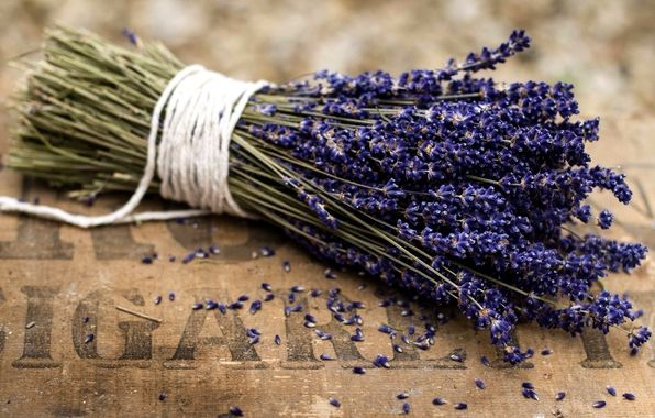 лаванда, букет, цветы, фиолетовые