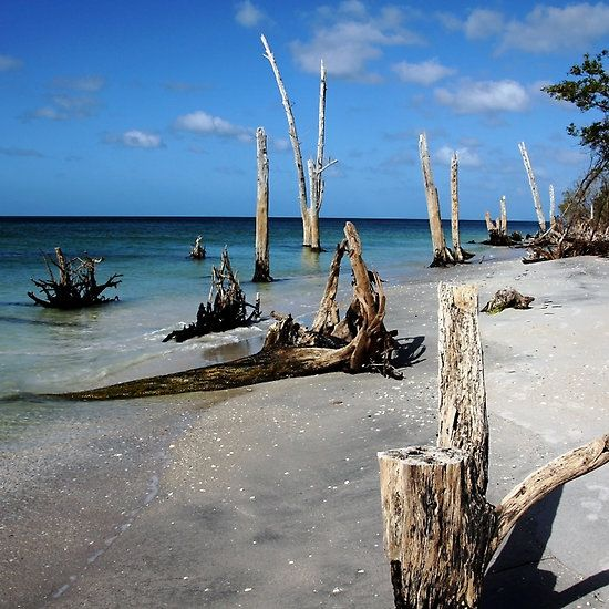 Sun Bleached - Stump Pass Beach State Park Manasota Key Englewood Florida USA…