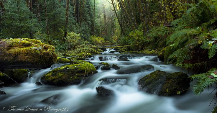 By Thomas Dawson: This image is part of the 'my secret paradise' series which are shots taken at a remote location I found in a forest on Vancouver Island, Canada. Prints can be purchased at: http://thomasdawsonphotography.zenfolio.com/ or: http://www.redbubble.com/people/isladethomas