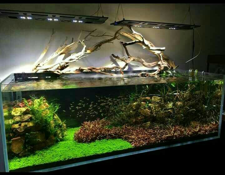 17 best images about aquariums on pinterest aquarium for Fish tank driftwood