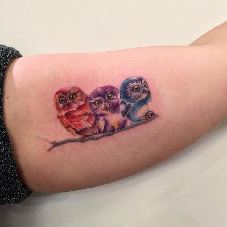 Colorful Owls Sitting On A Branch Tattoo By Christine
