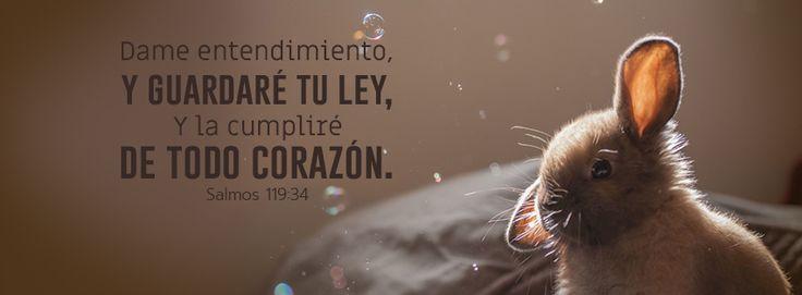 """Dame entendimiento - Salmos 119:34 """"Dame entendimiento, y guardaré tu ley, Y la cumpliré de todo corazón."""""""