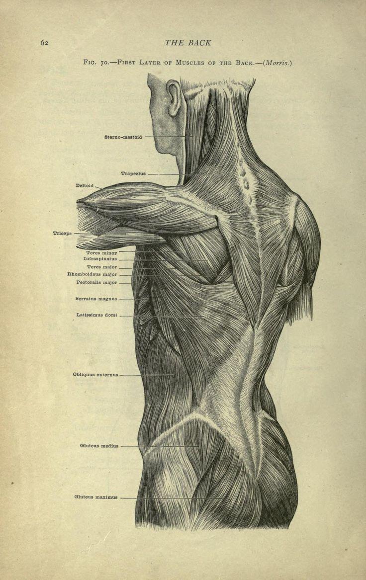 468 Best Vintage Anatomy Images On Pinterest Medical History