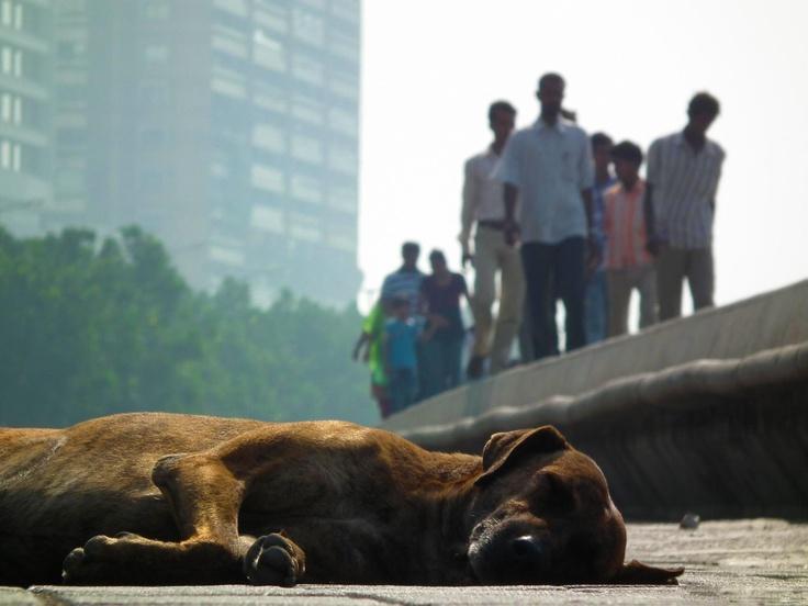 India, Mumbay, Dog resting