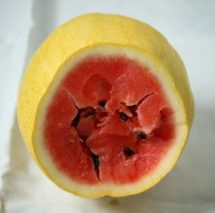 Types of Watermelon  By Katherine Cancila [click for article]