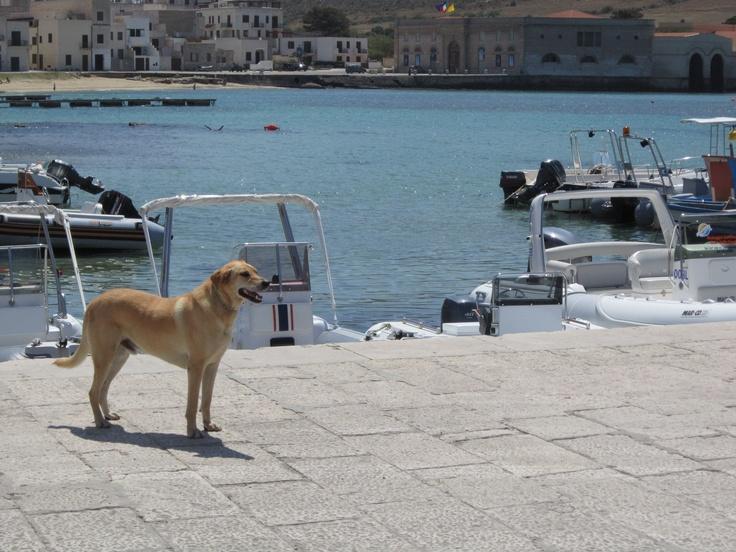 Farfalla Island - Sicily  #sicilytours #equatours