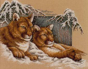 cougars in snow 3/7
