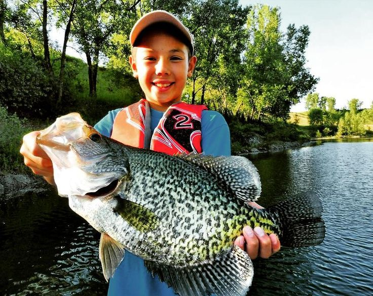 606 best images about walleye fishing on pinterest for Take me fishing lake locator
