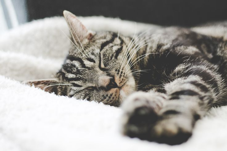 Tipy ako bojovať s jarnou únavou :) https://www.namaximum.sk/clanky-a-oznamy/clanky/zabudnite-na-jarnu-unavu-s-fenylalaninom-a-vitaminom-b6/