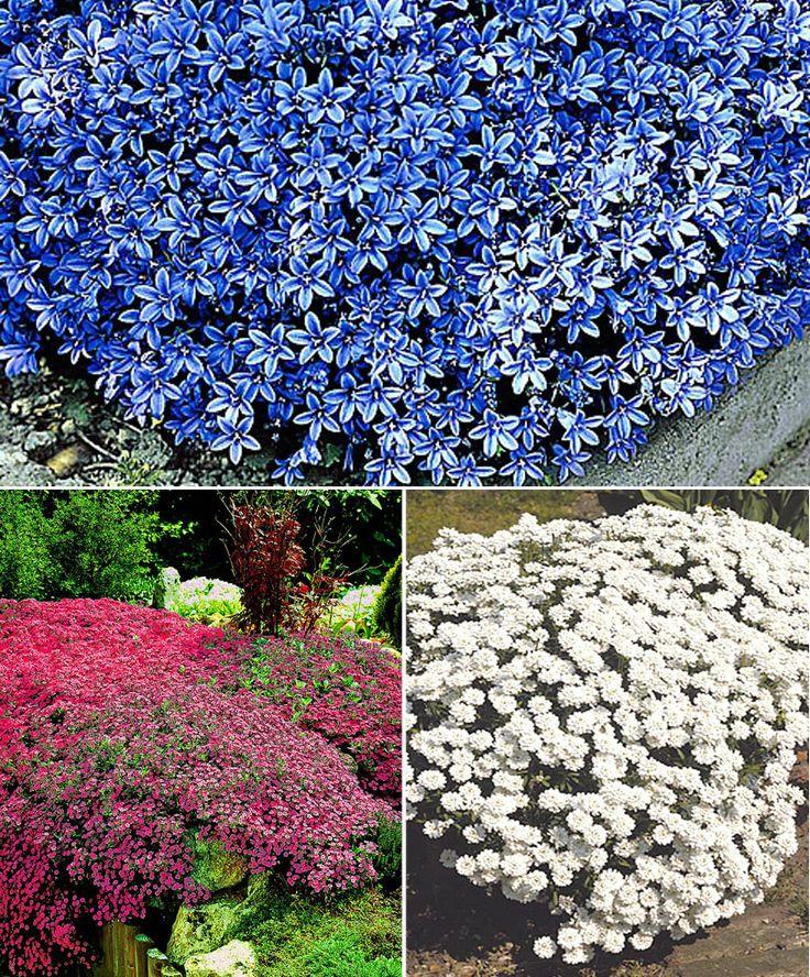 15 Plantes couvre-sol