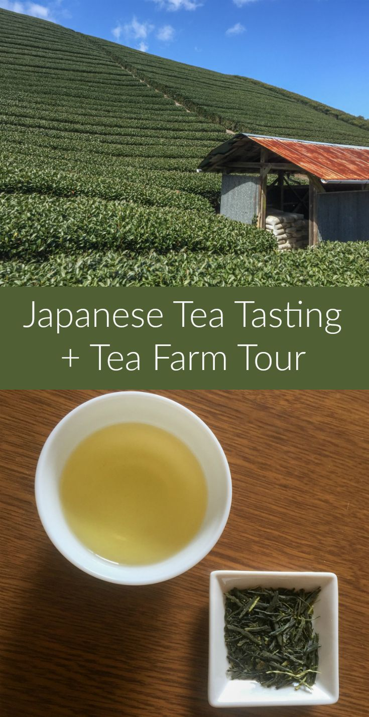 A Day in Japanese Tea Country: Green tea tasting and a tour of tea fields near…