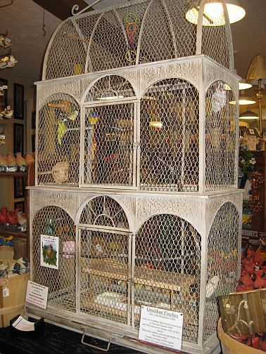 beautiful finch cage