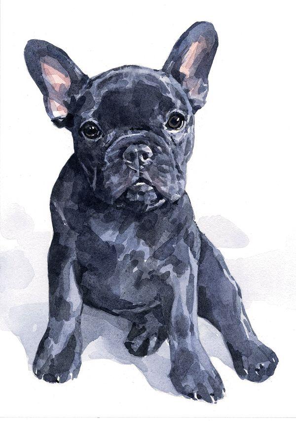 11x14 Dog Portrait - White background | david scheirer watercolors