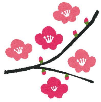 春らしい梅の花のイラスト。花びらや枝についたツボミがかわいい和風デザイン。