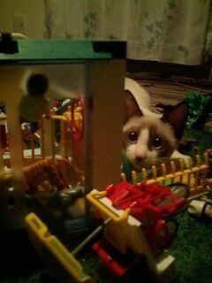 Cat in the Ruins: Chimaki Cat