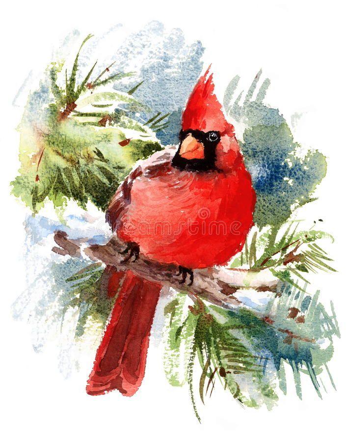 Cardinal Bird Watercolor Winter Illustration Hand Drawn Stock