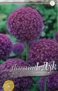 Аллиум Гигантеум купить - Луковицы и корневища: мелколуковичные многолетние растения для сада