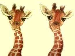 TITIRI giraffe- step by step, a drawing made with aquarell pencils