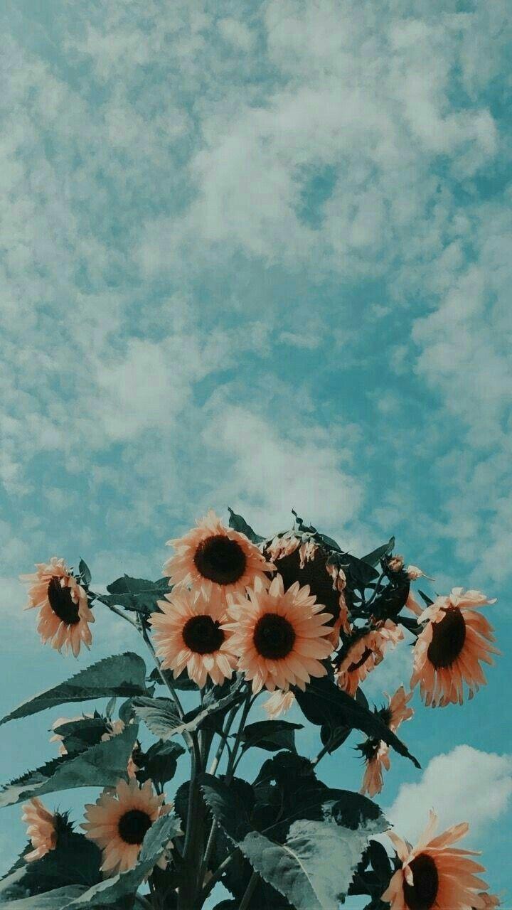 Navaapark Sunflower Wallpaper Painting Wallpaper Aesthetic Iphone Wallpaper