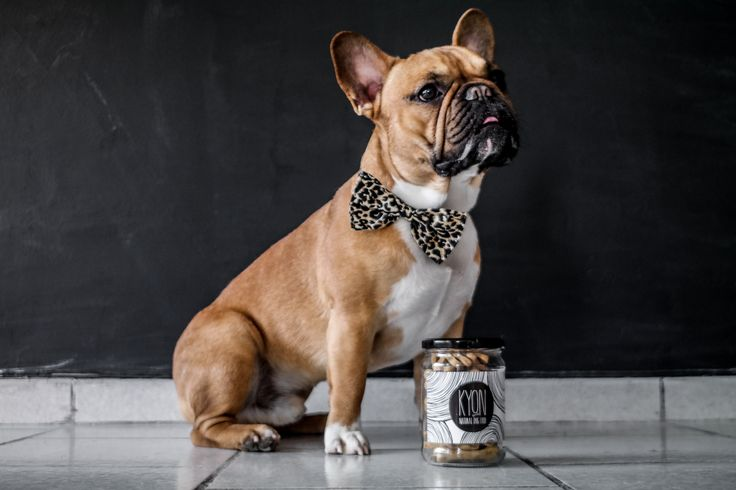 "Mister Beau, from the amazing frenchie duet ""Bella loves Beau"", is all dressed up and posing next to his KYON jar. Talk about class!  Order your own here: www.kyonnaturaldogfood.com. #dog #treats #frenchbulldog"