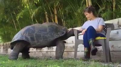 Giant Tortoise 🐢 ❤️