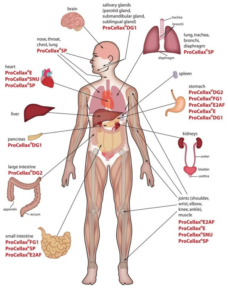 Internal organs diagram female