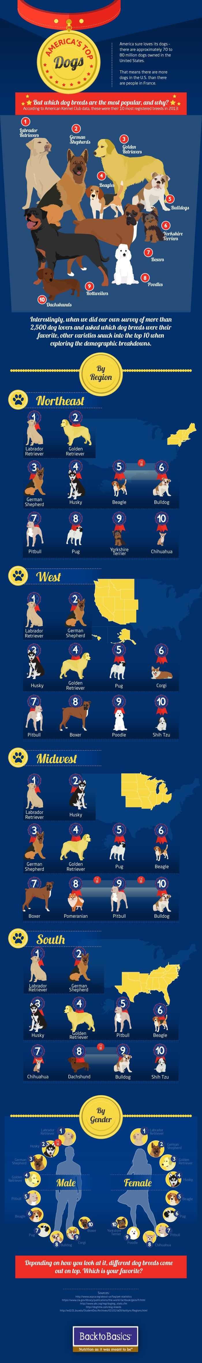 Top 10 dog breeds in the U.S. and why we love them. #dogs #dogbreeds #infographics @mashable