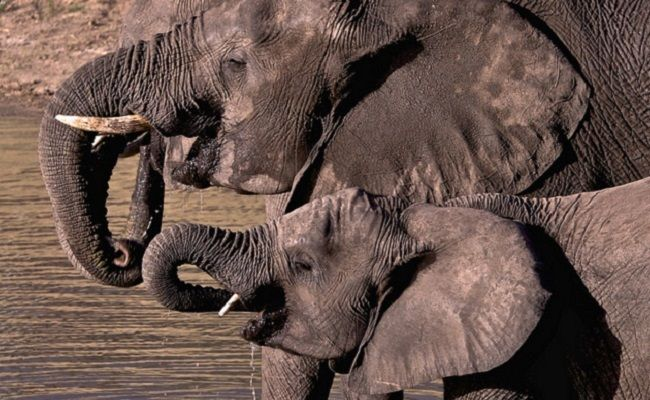 Success! China Announces End To Ivory Trade In 2017 | Care2 Causes