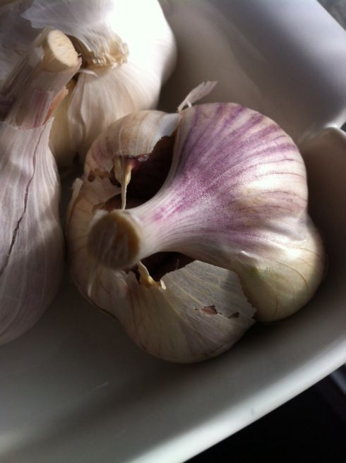 Garlic- Locally Grown in Alberta (New Oxley Garlic Naturally)... Soon to be growing in my garden next year