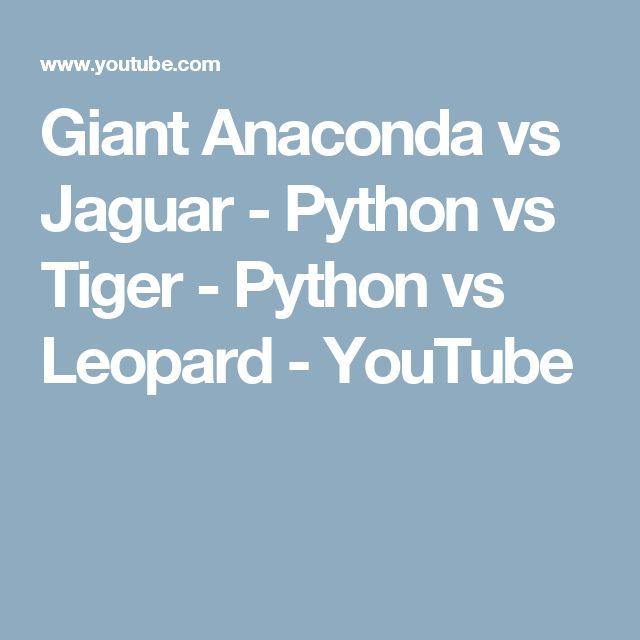 Giant Anaconda vs Jaguar - Python vs Tiger - Python vs Leopard - YouTube