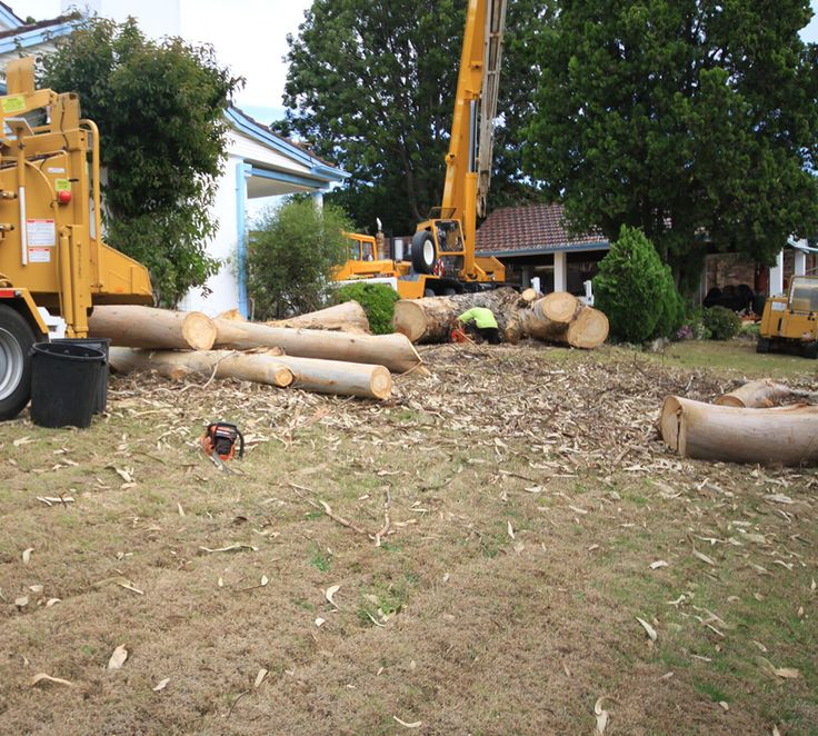 Right from the start, Tall Timbers Tree Services has serves both residential and commercial customers. Our services have evolved and grown through the years, ranging from tree lopping services to very large, complex jobs using cranes and other equipment.