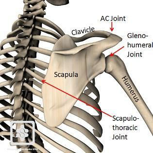 Shoulder Impingement: Part 4   The Thoracic Spine and Ribcages Role in Impingement