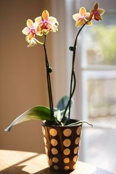 """How to Care for Orchids. Actually this should be in a category labeled """"In My House."""" I don't think orchids would grow well under two feet of snow."""