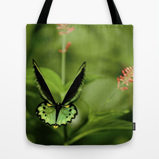Birdwing butterfly by Deborah Janke.  This design if available in other products