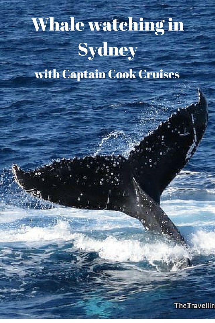 Whale watching in Sydney with Captain Cook Cruises Whale Watching Cruises