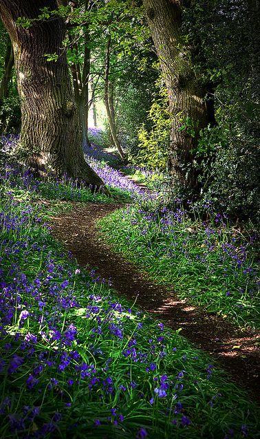 Derbyshire, England • .