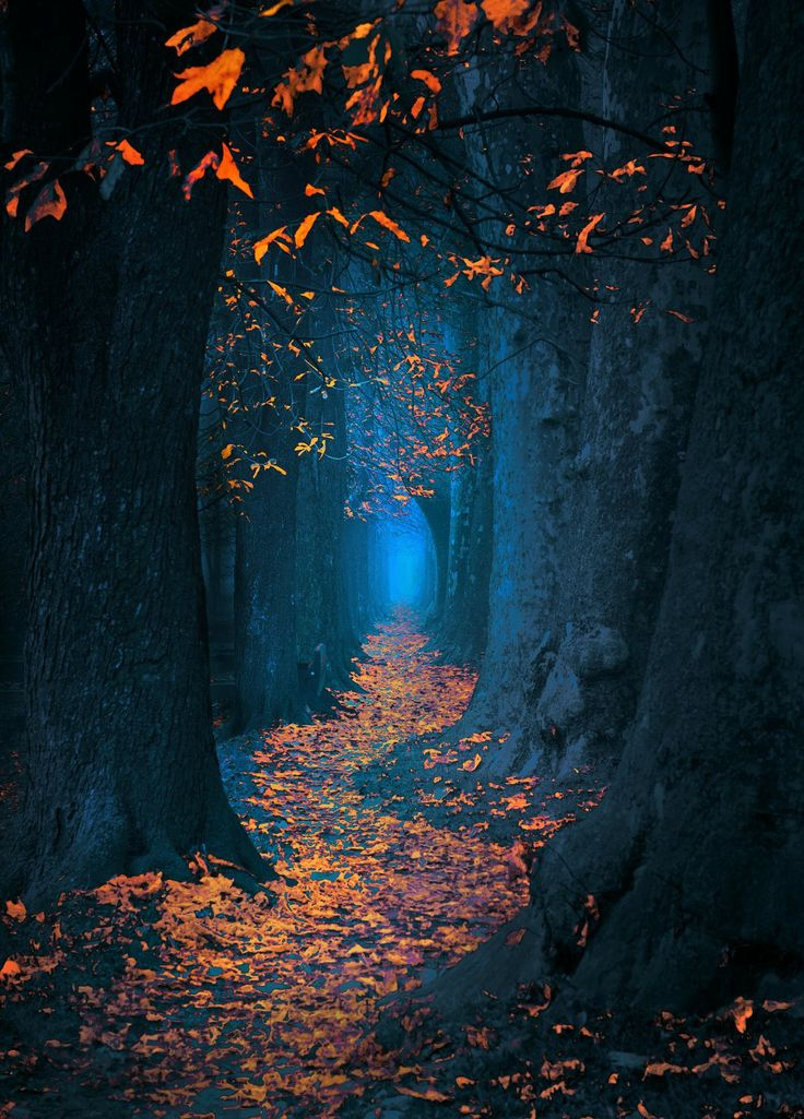 Fairytale pathway through the forest - I love the bright orange leaves, the almost look like candles