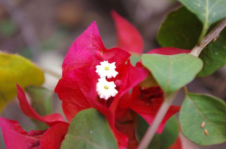 Flora nativa de el bosque seco tropical