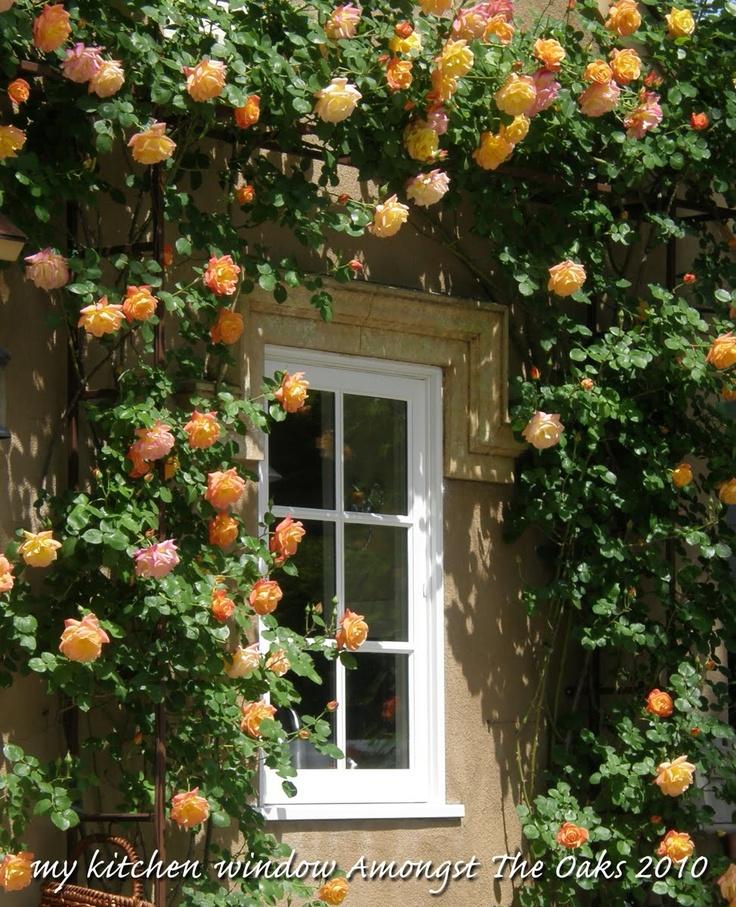 17 Best Ideas About Kitchen Garden Window On Pinterest: 17 Best Ideas About Kitchen Garden Window On Pinterest