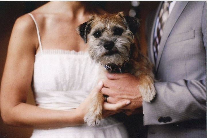 my border terrier