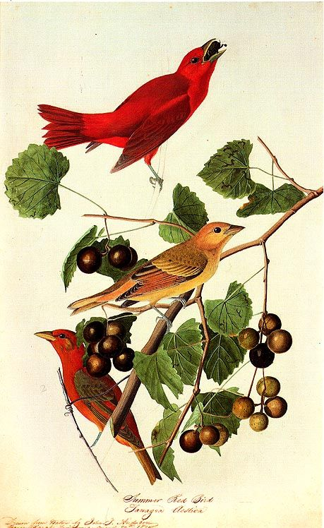 John James Audubon Paintings 35.jpg