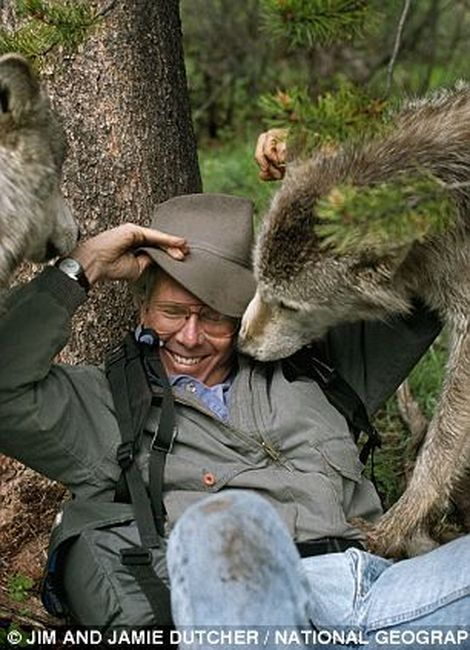 Many of us have heard of dance with wolves, but one couple took their interaction with the animals even further. Jim and Jamie Dutcher lived out of a tent inside the world's largest wolf enclosure from 1990-1996 to closely document the behavior of these majestic animals. Check out the strange relationship….