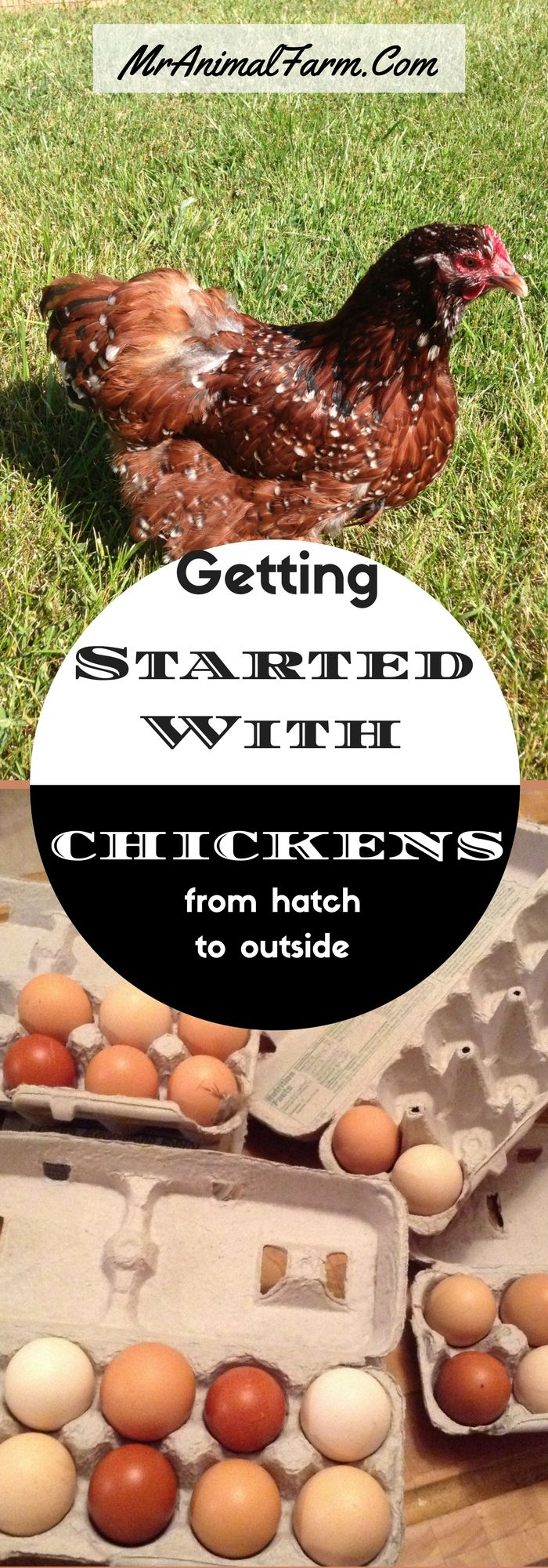 4332 best homesteading group board tried and true images on