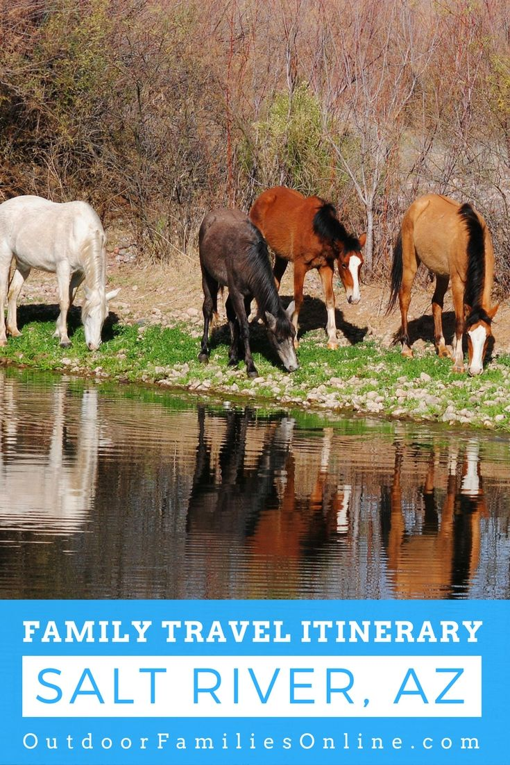 Salt River, Arizona is home to herds of wild horses, in addition to providing an abundance of outdoor recreation. This is a must-see stop on any Arizona family road trip vacation.