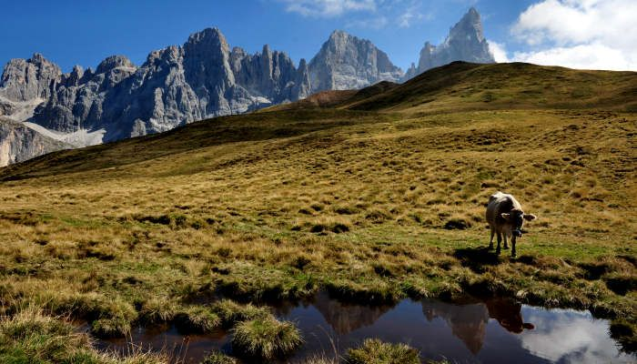 Trekking-del-Cristo-Pensante-Passo-Rolle-Pale-San-Martino-C01.jpg (700×400)