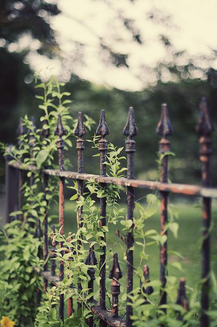 """""""The back garden was surrounded by a tall iron fence covered in honeysuckle vine two feet thick in places, and topped by pointy finials, like that of an old cemetery."""""""