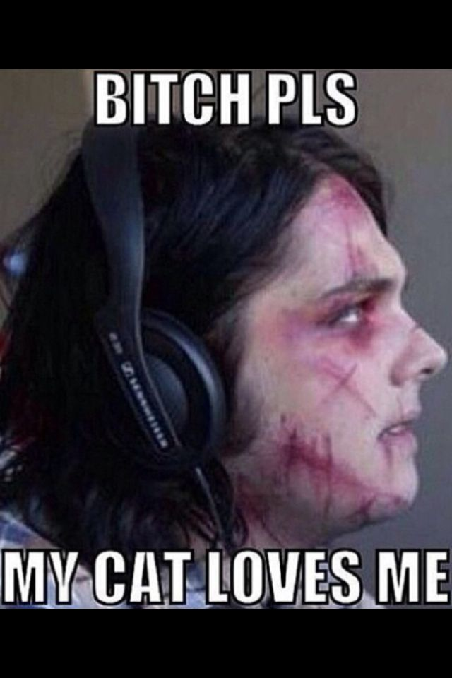 Gerard way my chemical romance funny my cat loves me