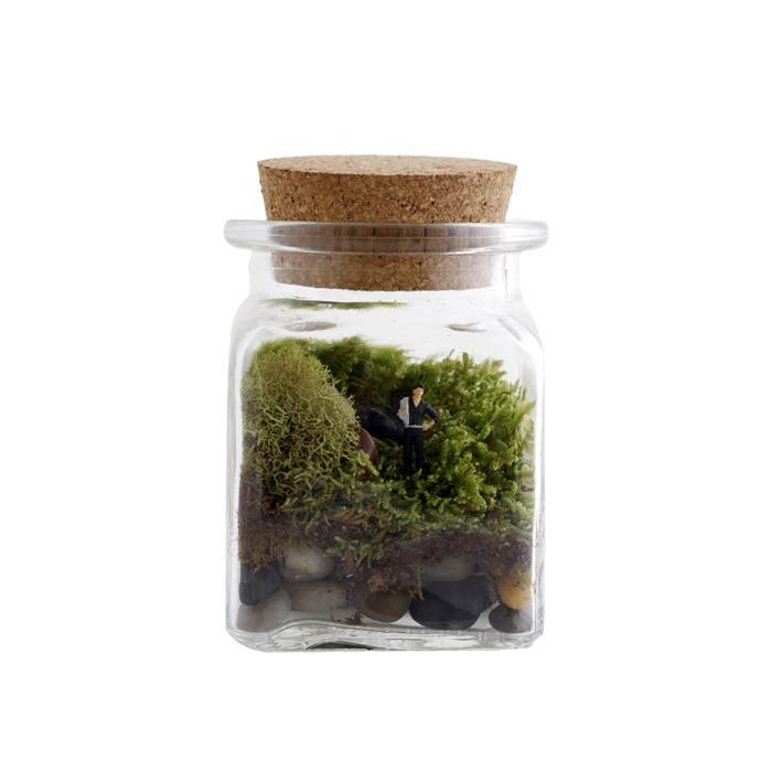 Fauna Faux Terrarium Kit - 117 Best Aquariums & Terrariums Images On Pinterest Plants